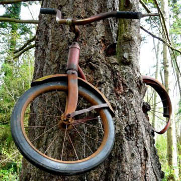 bike-in-tree-vashon-island